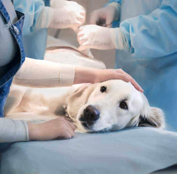 Haustierversicherung übernimmt auch Tierarztkosten Hundevrsicherung Katzenversicherung