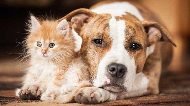 Hund und Katze richtig versichern mit der Haustierversicherung